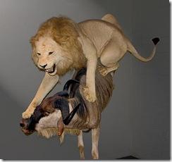 lionleapgnu