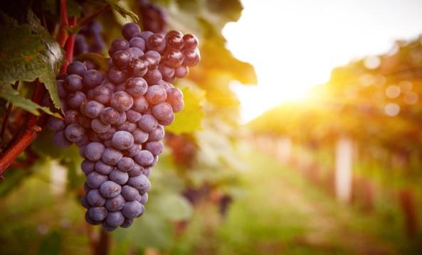 RedClub-Wine_banner1c